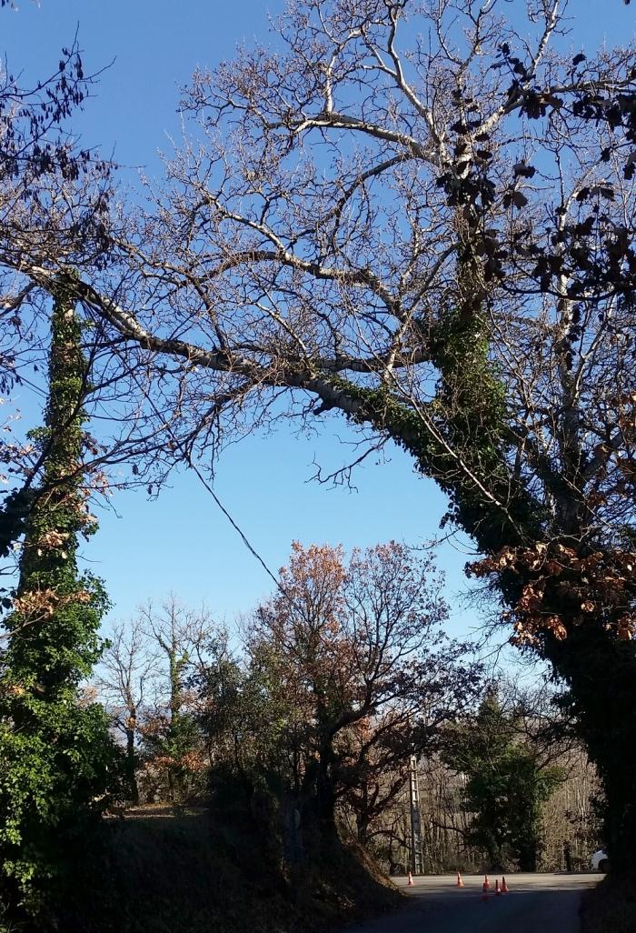 20200131_112428 arbre siant donat.jpg