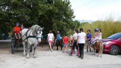 poneys caleche.jpg