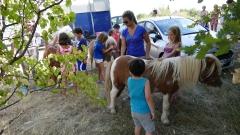 les poneys arrivent.jpg
